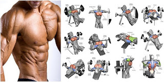 How many types of workout in gym? modernabiotech