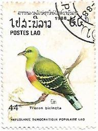 Selo Pombo verde