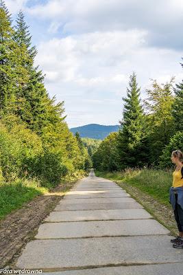 Leśna droga między Mochnaczką a Izbami, widok w kierunku Izb