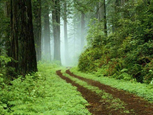 Hutan Paling Berhantu di Inggris