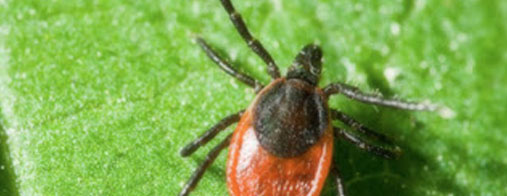 Tick Pest Control Specialist for your House