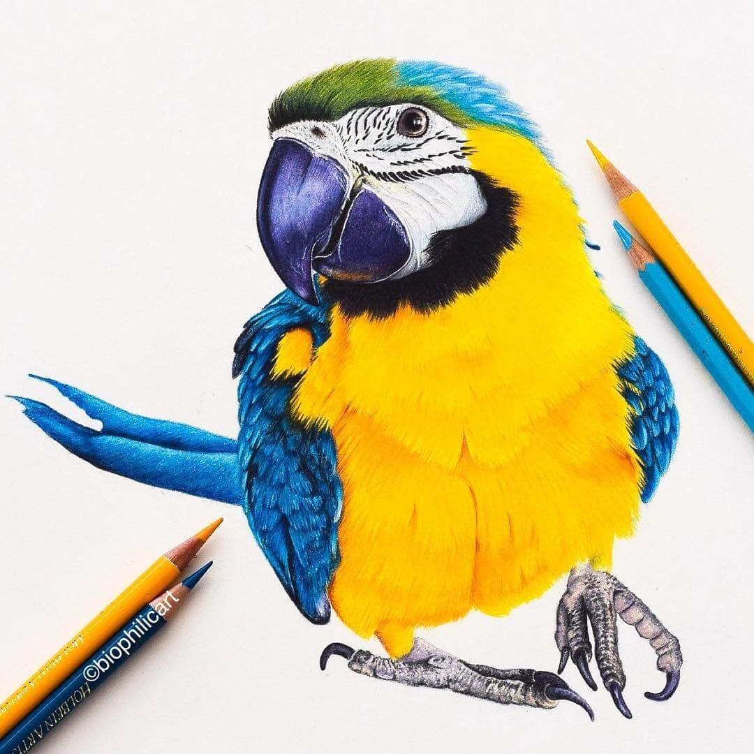 09-Macaw-Parrot-Sallyann-Brightly-Colored-Animal-Pencil-Drawings-www-designstack-co