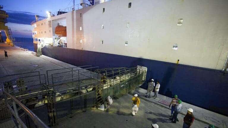 احتجاز-سفينة-كويتية-لنقل-الماشية-قبالة-أستراليا-بسبب-كورونا