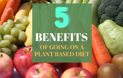 5 Benefits You Get From A  Plant Based Diet