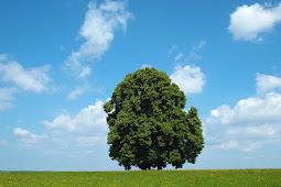 HEMAT KERTAS ! Berapa kertas dihasilkan dari sebuah pohon?