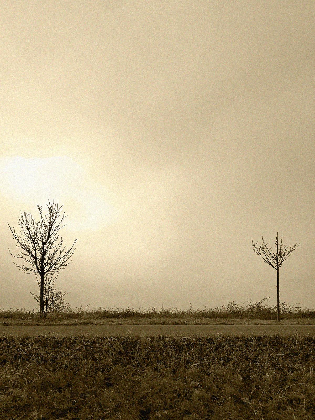 Träd med social distans
