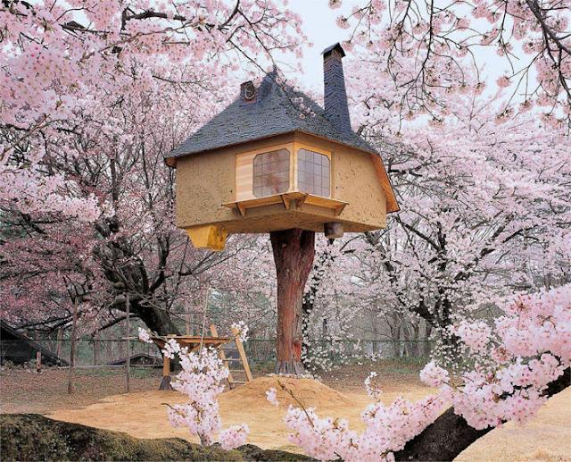 شاهد صور 29 منزل فوق الأشجار سيعجبك أن تعيش بها  Top-29-Treehouses-Tetsu-Photo-by-kido