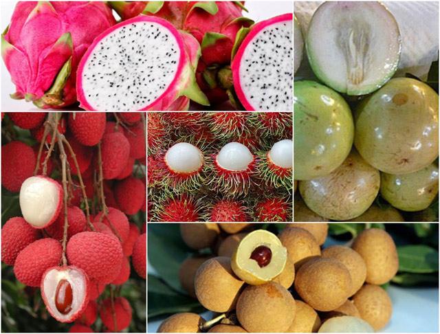 xuất khẩu trái cây