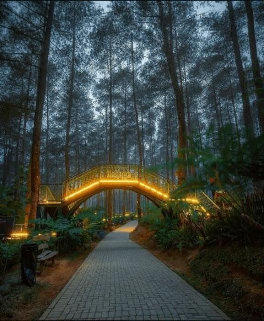 Ponte do incêndio florestal na terra das orquídeas