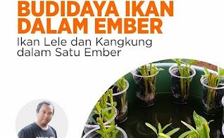 Cara Membuat dan Memelihara Budi Daya Ikan & Kangkung Dalam Ember (Budikdamber)