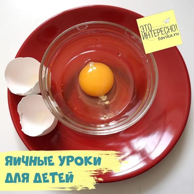 детям о яйцах птиц и других животных