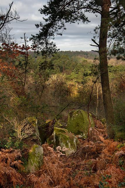 Grand Mont Chauvet, Forêt de Fontainebleau.