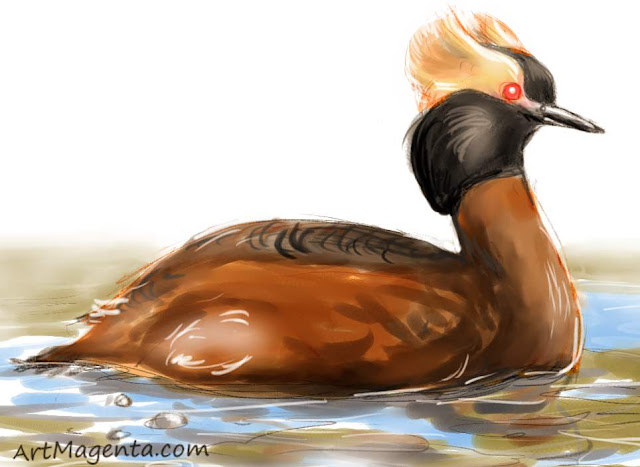Horned Grebe sketch painting. Bird art drawing by illustrator Artmagenta.