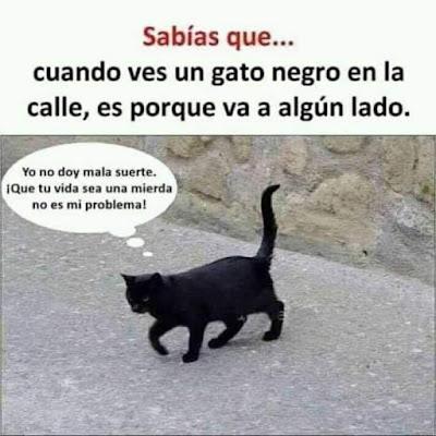Cuando ves un gato negro en la calle es porque va a algún lado