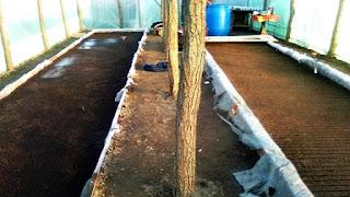 rasadnite ingropate la baza solului in solar