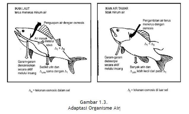 Adaptasi Organisme Air