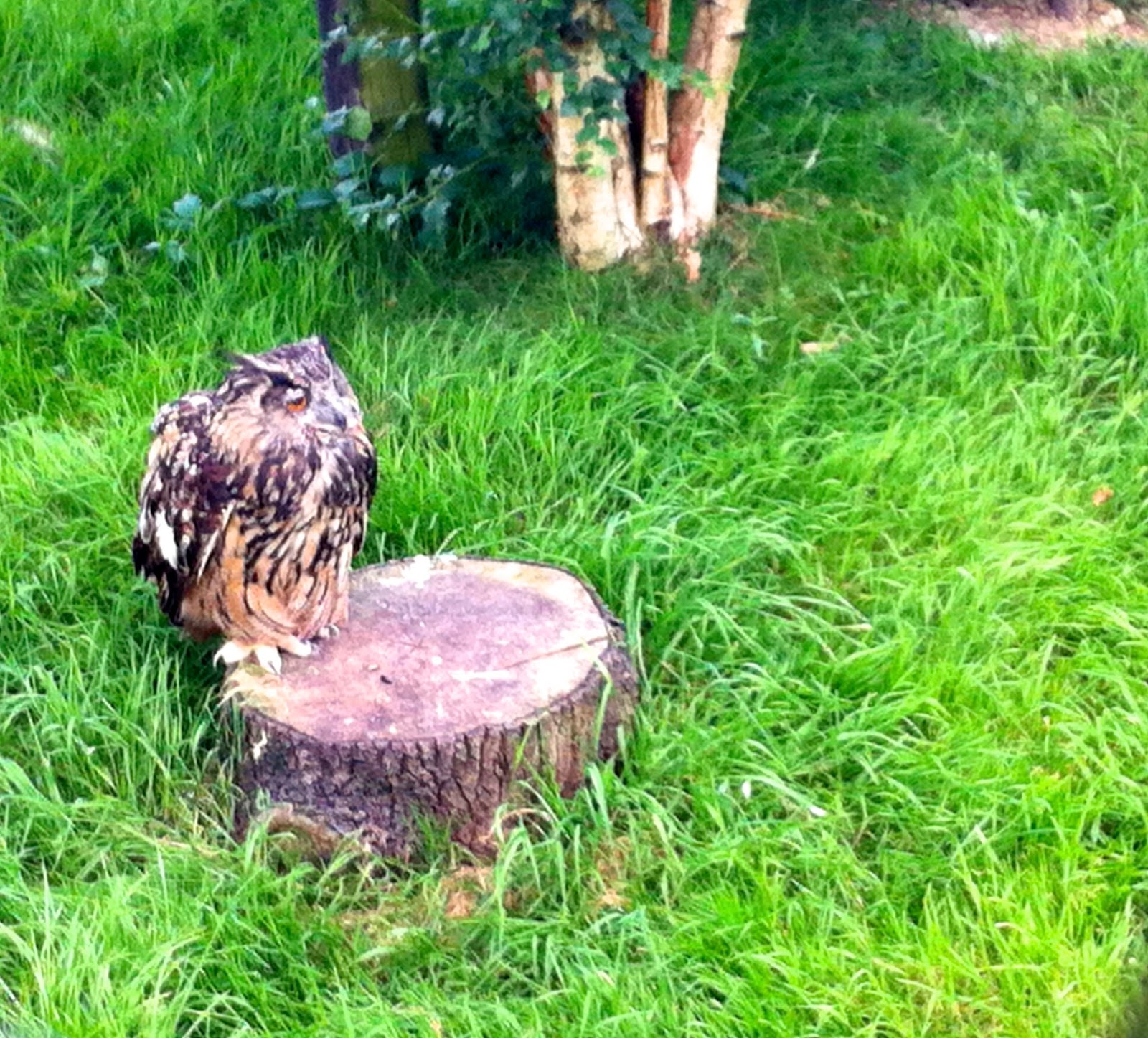Owl on a tree stump