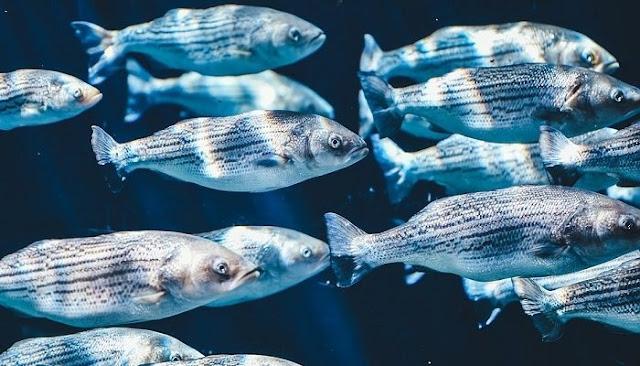 peshq në thellësi