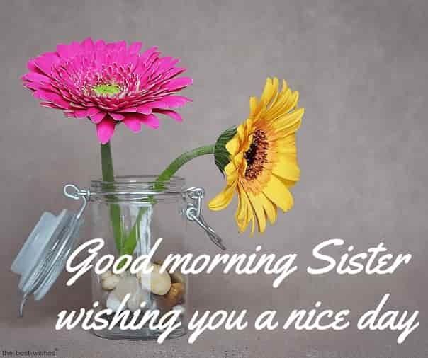 good morning sister wishing you a nice day