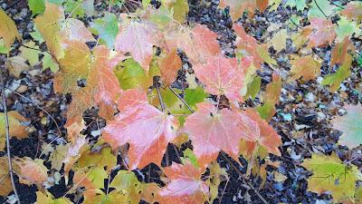 autumn color in rain