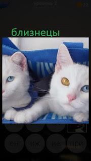 389 фото две кошки близнецы белого цвета 2 уровень