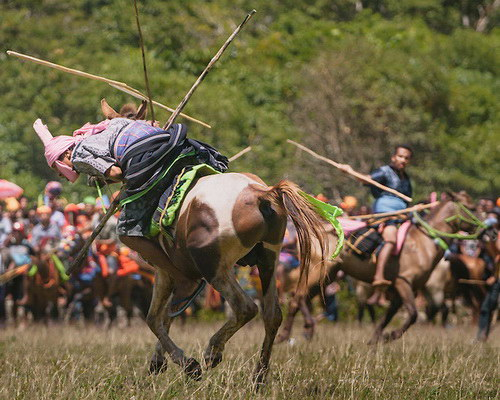 Tinuku Travel Pasola war games Marapu religious knights in Southwest Sumba after Nyale worm feast