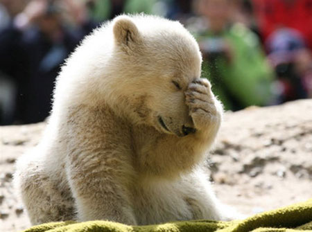 Cute Bear Facepalm