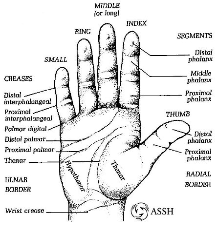 abc's of ra: in the joint hand anatomy diagram #10