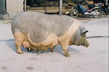 Kiếp trước lợn sề