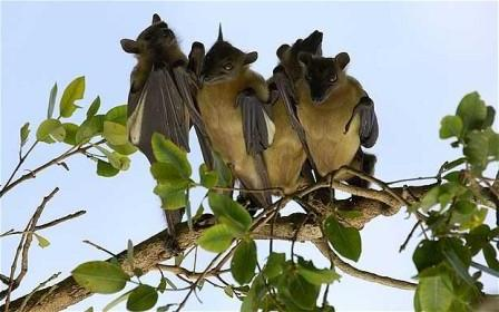 bat-worship-as-god-and-protector-image