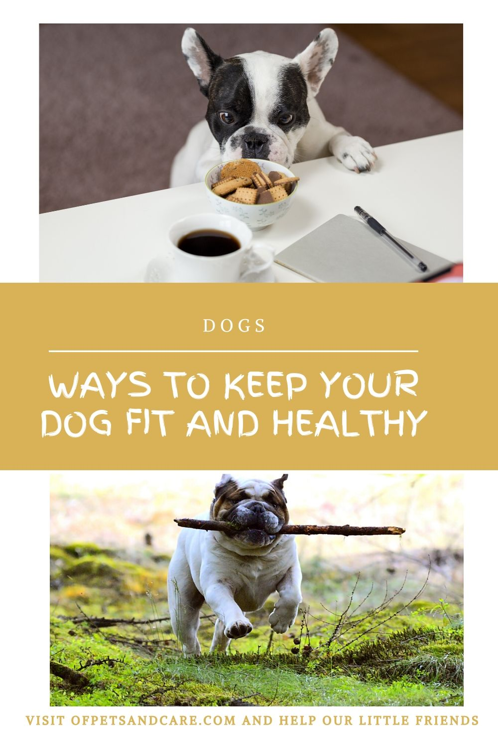 Ways to Keep Your Dog Fit and Healthy,