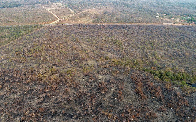 Η αποψίλωση του Αμαζονίου διπλασιάστηκε σε έναν χρόνο