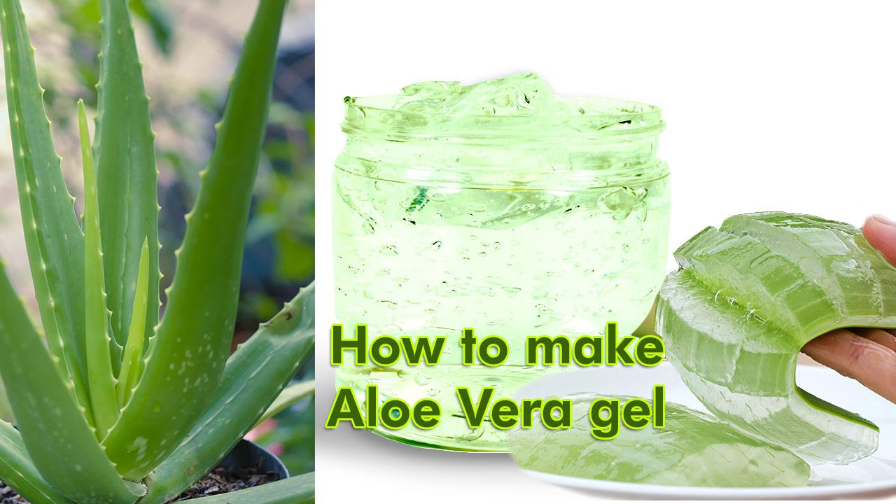 how+to+make+aloe+vera+juice; how+to+make+aloe+vera+gel; how+to+prepare+aloe+vera; how+to+make+aloe+vera+oil; how+to+make+aloe+gel; how+to+prepare+aloe+vera+juice; how+to+make+aloe+vera; how+to+make+aloe+vera+juice+taste+better; how+to+make+homemade+aloe+vera+gel; how+to+make+aloe+vera+cream; how+to+make+aloe+vera+gel+from+plant;