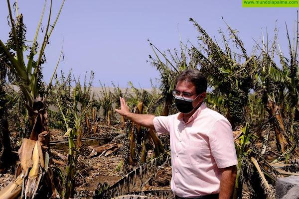 El informe del Cabildo por las altas temperaturas y el incendio arroja importantes daños en el agro palmero