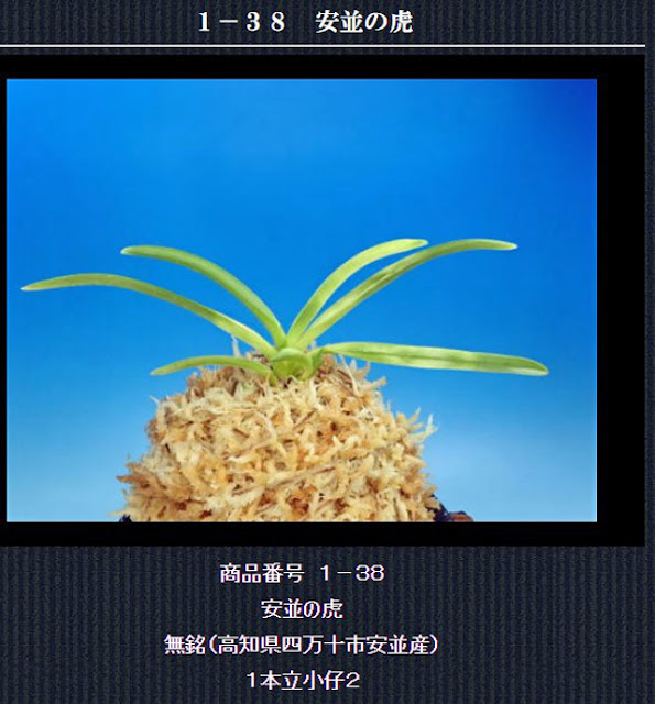 http://www.fuuran.jp/1-38.html
