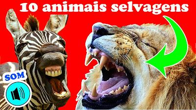 animais selvagens vídeo infantil