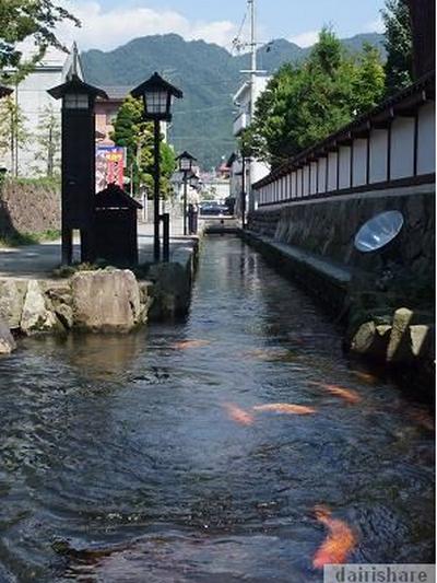 Di Jepun Ikan Koi Hidup Bebas Di Dalam Sungai video