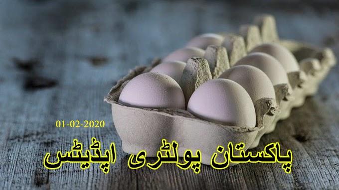 پاکستان پولٹری اپڈیٹ Pakistan poultry updates 01-02-2020