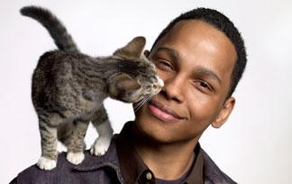 Tại Sao Mèo Lại Thích Liếm Lông?