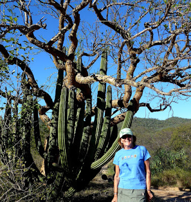 Liz on our hike with cactus and trees.