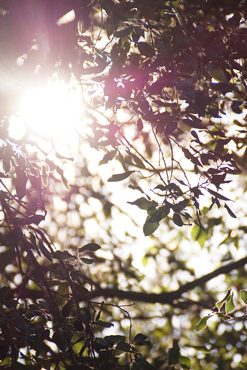 Sunshine shining through trees in Croatia | summer vacation in the countryside