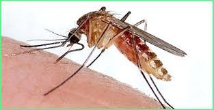 Phun muỗi tại huyện Phú Xuyên