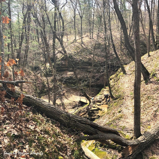 Ravines displaying interesting rock ledges covered with moss and trees in all directions intrigued at Wildcat Den State Park.