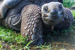monster tortoise