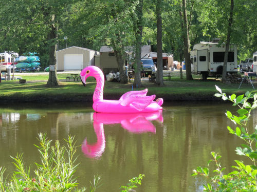 flamingo float