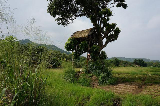 casa sull'albero-casa-albero