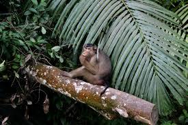 New-Kahani-जानवरों-की-एकता-ने-जंगल-को-बचाया!