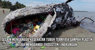 Selain menganggu kesehatan tubuh ternyata sampah plastik juga menggangu ekosistem lingkungan