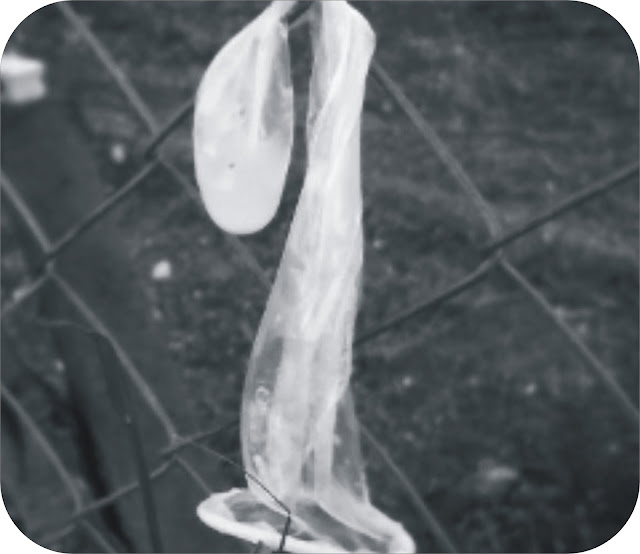 Boy 5 chews used condom