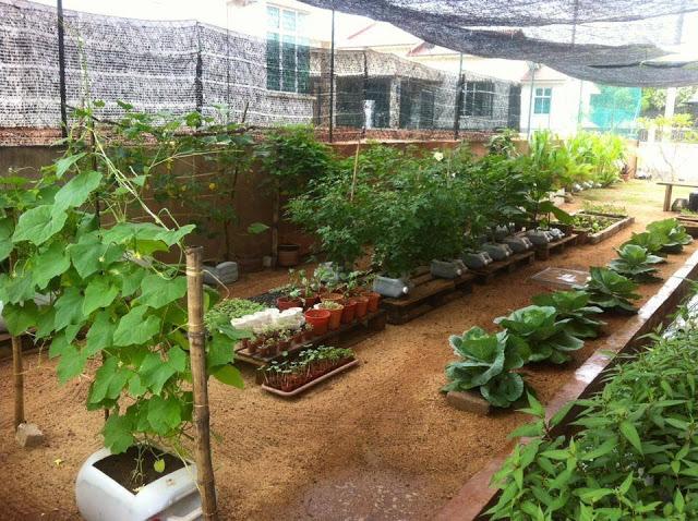 20 Gambar Inspirasi Kebun Sayur Belakang Rumah Bangno Id